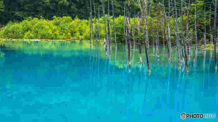神秘的な青い池。丘と木が織りなす絵画のような見事な光景…そんなどこまでも魅力的な美瑛。ここに紹介した以外にも素敵な観光スポットはたくさん点在しているので、興味を持たれた方はぜひ、実際に訪れてみてください。きっと一生心に残るような美しく幻想的な光景に出会えると思います。