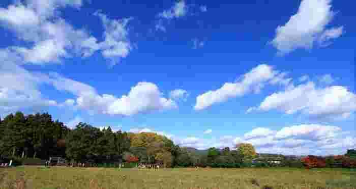 落柿舎の前には田畑が広がっており、視界を遮るものは何もありません。のどかでノスタルジックな雰囲気が漂う嵯峨野エリアの中でも、落柿舎前は、特に素晴らしい景観が広がっています。