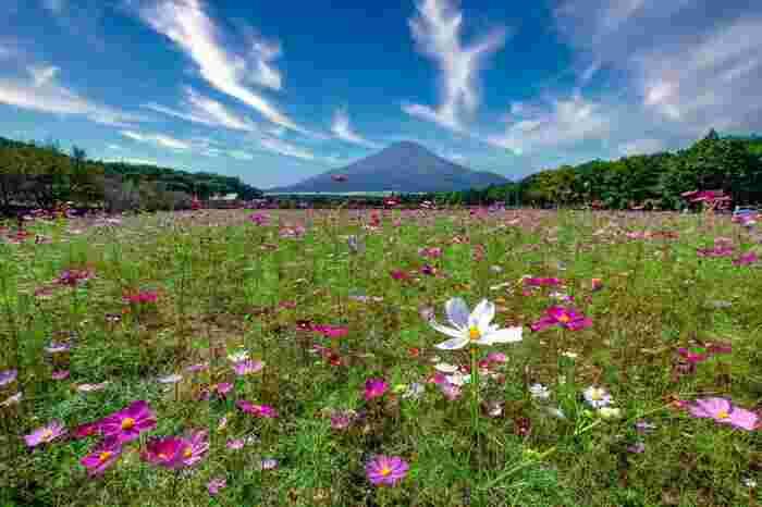 富士山を真正面にした絶景は感動もの。是非カメラを持って訪れていただきたいフォトジェニックスポットです!また、冬には園内でイルミネーションが開催されており1年を通して違った景色を見ることができるのも魅力ですね。