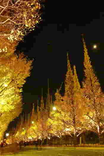 11月下旬から12月上旬にかけて行われるライトアップもステキですよ。淡いライトに照らされたイチョウが、真っ暗な夜空に輝いてロマンチックな姿に。昼間とはまた違ったイチョウ並木を歩いてみてはいかがでしょうか?