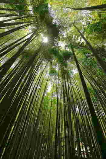 夏の暑いシーズンでも竹林の中はとても涼しいんです。不思議な竹のパワーに圧巻されますよ。