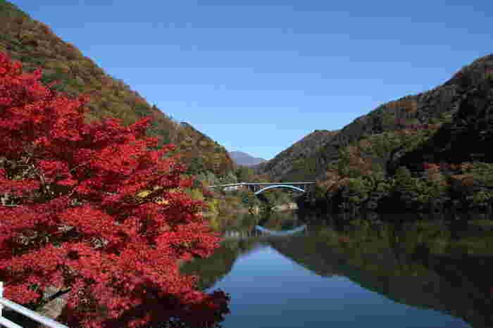 「かながわの景勝50選」にも選ばれた丹沢湖は11月中旬から下旬が見頃。緑と紅葉のコントラストが美しい風景をレンタサイクルでゆっくりと楽しむのもおすすめです。