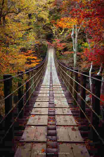 特におすすめのスポットがこちら。渓谷にかかる吊り橋からは、色彩豊かな紅葉が覆い被さるように見えます。どこを切り取っても絵になりますね。
