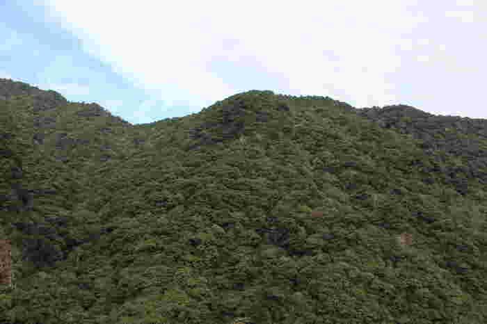 日本最大規模を誇る「綾の照葉樹林」には、手つかずの豊かな原生林が広がっています。