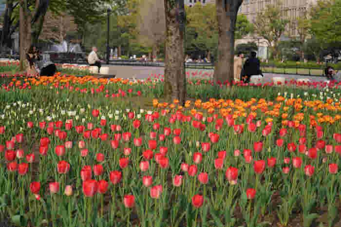 花壇には、四季折々の花が咲き誇ります。普段忙しくてつい通り過ぎてしまいがちですが、少し足を止めてみませんか?