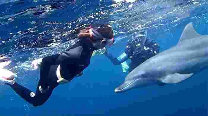 そして泳ぐ方は、こんなに間近でイルカの観察をしたり、泳いだりすることができるかも。