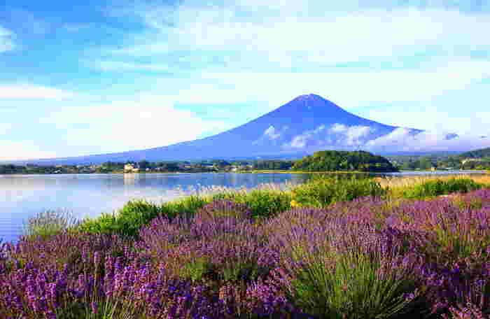都心から電車や車で1時間半から2時間。山梨県は豊かな自然とアクセスの良さが魅力の観光スポットです。富士山や富士五湖の雄大な自然に癒されたり、八ヶ岳周辺で涼しい高原の風を感じたり・・・。今度の週末には山梨に観光に出かけてみませんか?  そこで、山梨観光で買って帰りたい素敵なお土産をいくつかご紹介したいと思います。是非参考に、旅のプランを考えてみてくださいね。