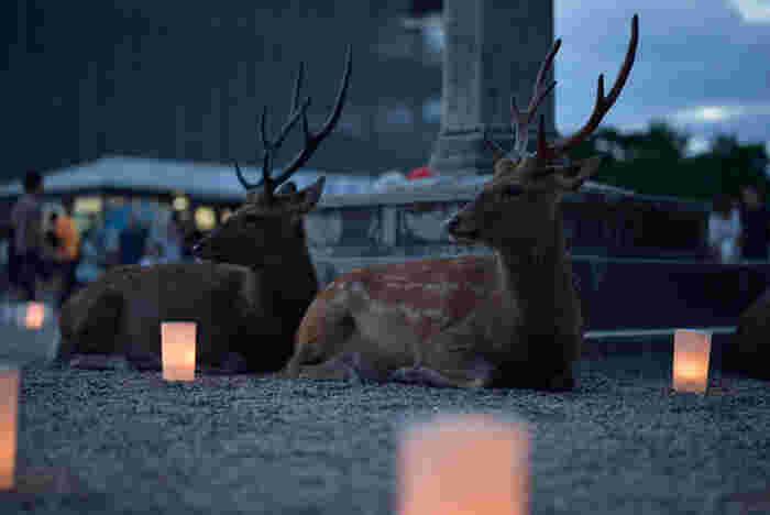 これから夏に近付くにつれ、夕涼みがてらにそぞろ歩く夜の散歩も気持ちの良い季節です。ご紹介したライトアップイベントの他にも、寺社仏閣の特別公開、音楽イベントなども色々行われますので、奈良にお越しの際はぜひ楽しんでみて下さいね。