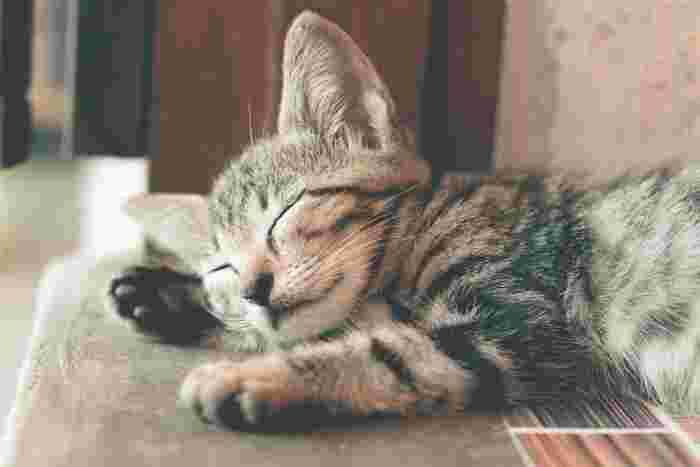 猫・小鳥・フェレットなどはハッカの匂いを苦手とします。特に猫の場合はアレルギーを起こす可能性もあるため、使用は控えましょう。