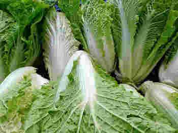 白菜はカットしてあるものを買うよりも、常備菜を作るなら丸ごと買ったほうが断然お得です。大きな白菜も、お漬け物にしたり煮物にするとかさが減り、あっという間に食べられますよ。