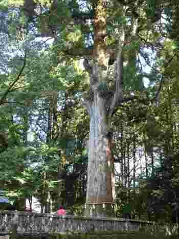樹齢800年以上のこちらの杉は、霧島神宮の御神木。南九州の杉の祖先といわれており、生命力を感じます。いくつもの時代を生き抜いた御神木からパワーをもらいましょう。