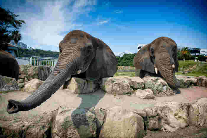 サファリゾーンでは、ゾウなどの草食動物に餌をあげることができます。時間が決まっており、予約制となっているので、パンフレットで事前に時間を確認しておきましょう。