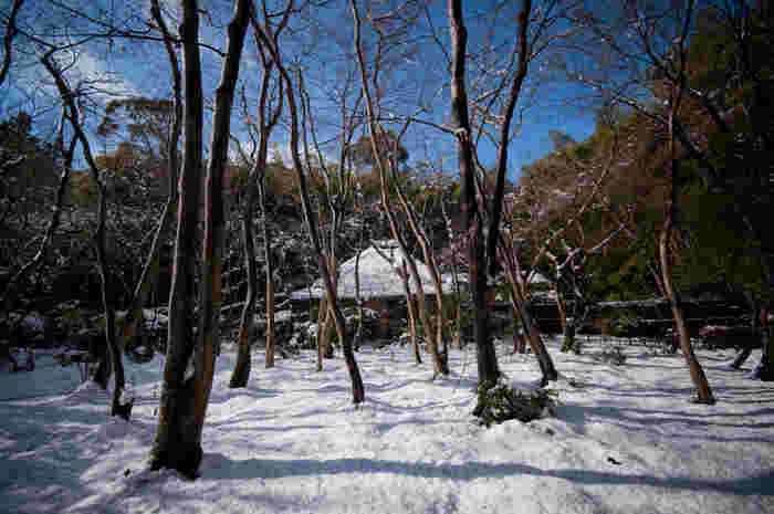 【雪の「祇王寺」】