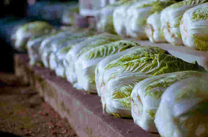 白菜が最も美味しい旬の季節は、11月頃から2月頃になります。水分が約95%と成分のほとんどが水分ではありますが、わずかながらも様々な栄養素が含まれています。 精進料理では、豆腐・大根と共に「養生三宝(ようじょうさんぽう)」と呼ばれています。