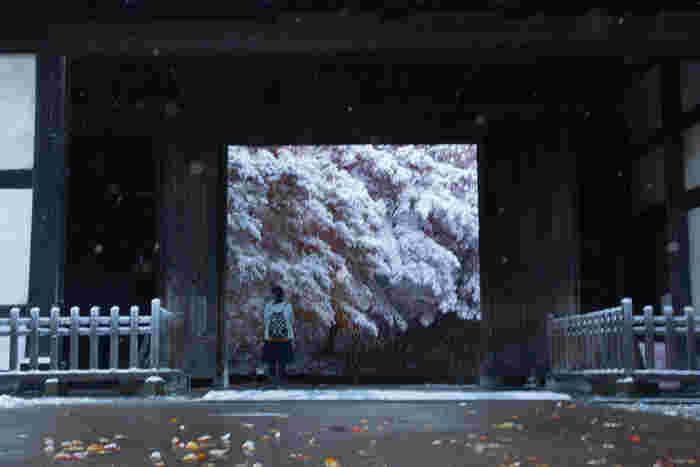 きれいに雪化粧した紅葉と南内門。両者が合わさって、なんともノスタルジックな雰囲気を醸し出しています。
