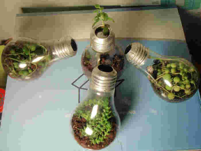 こちらは、電球に土と植物を入れプランターポットとして利用しています。