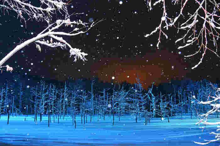 青い池は、美瑛が一面の銀世界となる真冬でも、美しい姿を見せてくれます。降りしきる雪の中、青白く輝く凍りついた湖面に立ち枯れの木が並んでいる様子は幻想的で、寒さを忘れていつまでも眺め続けていたくなります。