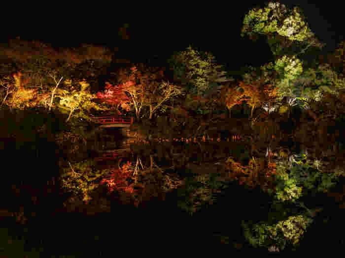 紅葉の時期になると、大沢池は日没後にライトアップが行われます。ライトを浴びて漆黒の闇夜に浮かび上がる紅葉した樹々を、鏡のような大沢池の水面が映し出す様は幽玄としており、幻想的な空間を作り出しています。
