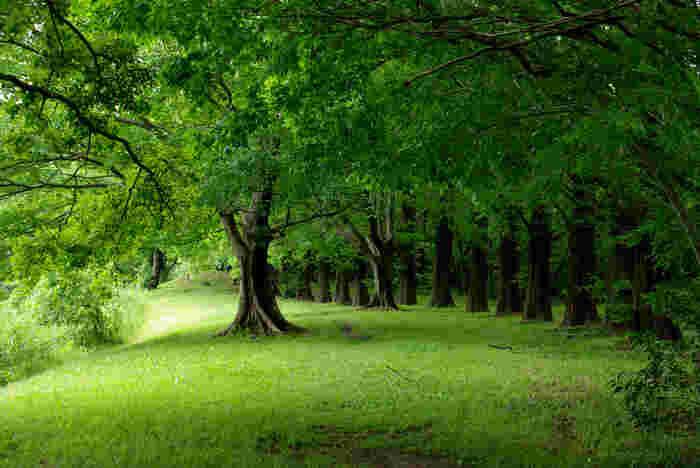 都会の喧騒に疲れたら、心安らぐ静かな森へ行ってみませんか?リフレッシュして、また明日から頑張れること間違いなし♪今回は関東近郊の7つの森をご紹介しますので、旅行おでかけ先などの参考にしてみてくださいね。