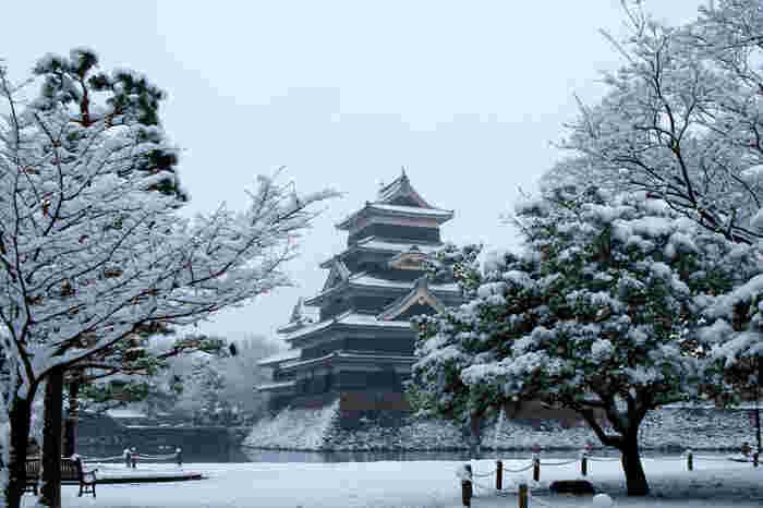 雪化粧をまとった松本城は、冬ならではの美しさを見せてくれます。木々に積もる雪や足跡の無い園内は、静けさに包まれて静謐な雰囲気です。