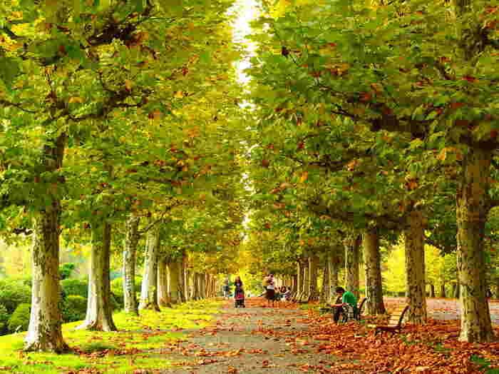 秋にはあちらこちらに色づいた紅葉が見られます。ヒガンバナやキンモクセイ、サザンカなども楽しめます*
