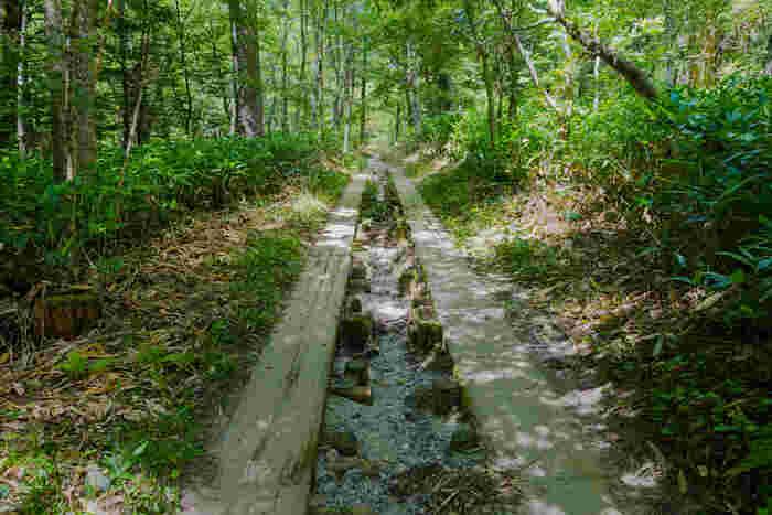 もう一つの林間コースは、ずっと針葉樹林を歩いて行くコース。先程のコースに比べると、眺めのいい所はありませんが、趣のある「手つかずの自然」を感じることの出来る、こちらもまたおすすめのコースとなっています。  今回ご紹介したコースはほんの一例です。田代橋~河童橋を行くコース、河童橋~明神間を行くコース、明神~徳沢を行くコースなど、ハイキングコースも様々です。自然からのパワーを体いっぱいもらって、思いっきり上高地を満喫しましょう。