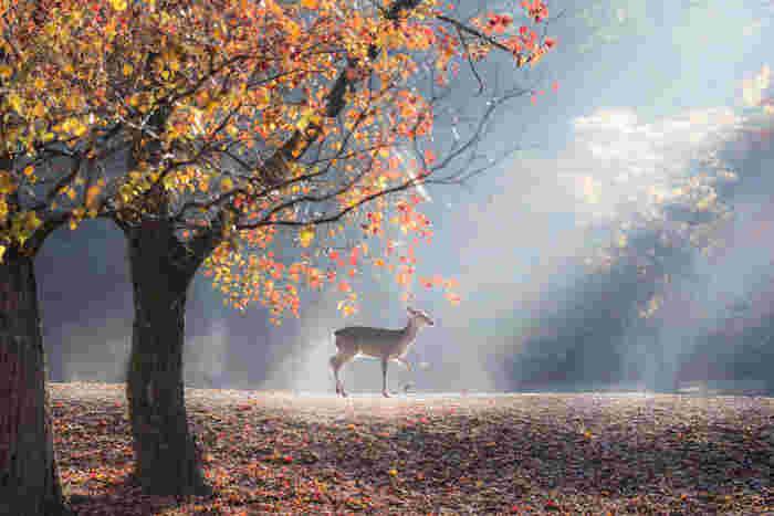 国の天然記念物である野生のシカが多く生息していることでもよく知られている奈良公園は、奈良を代表する観光名所で、国の名勝に指定されている都市公園です。