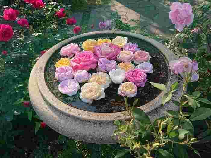 無料とは思えないほどの品種と、手入れに行き届いたローズガーデンはデートにも大変おすすめです。「香りの庭」「バラとカスケードの庭」「イングリッシュローズの庭」と3つのエリアに分かれています。潮風に乗ったバラの香りを楽しみながら、ゆっくりとお散歩してみてくださいね。