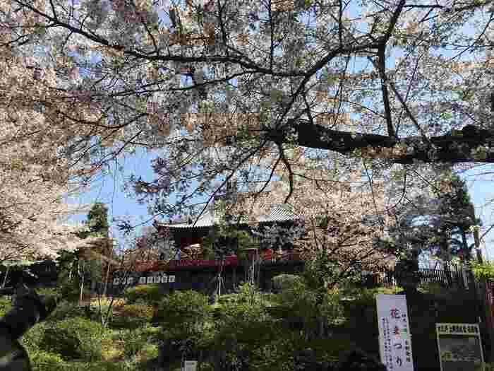 """江戸期を通じて寛永寺の寺領だった""""上野の山""""。 ご存知のように、上野公園は桜の名所として良く知られていますが、上野の山の桜の歴史は、この寛永寺の歴史と共にあります。【寛永8(1631)年に京都の清水寺を模して建てられた「清水観音堂(重要文化財)」】"""