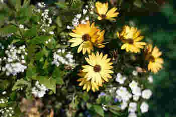 スズランとサンザシ、白いちいさなお花の中に、黄色いお花が引立ちます。