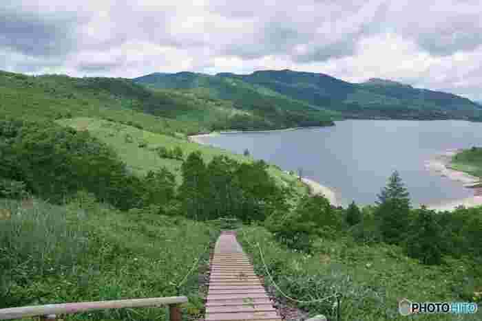 夏には、ニッコウキスゲやシラネアオイなど、300種類を超える高山植物が湖畔を彩り、遊歩道からも見ることができますよ。