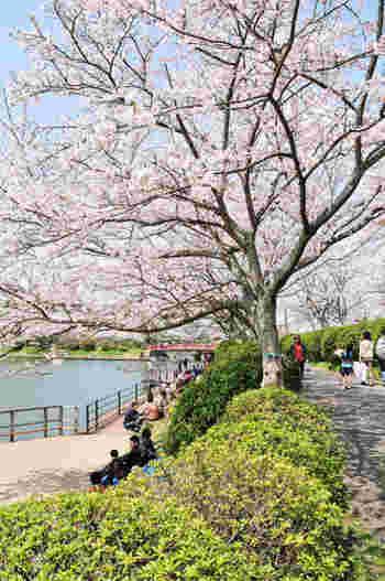 県内を代表する桜の名所のひとつということで、桜の時期は人が多いですが、福岡市内の名所よりは比較的のんびりと過ごすことができます。