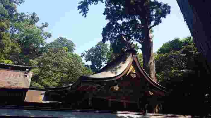 東京ドーム15個分に及ぶ境内地の中でも、最も大きい木が本殿の裏手にあるご神木です。高さ約40mにも及ぶ杉の木で、樹齢は約1,300年を数えます。壮大な姿に圧倒されます。