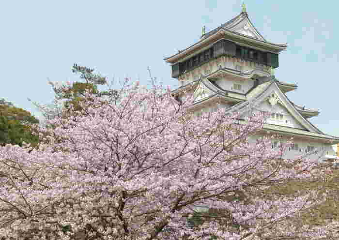小倉エリアで桜を見るなら、1602年に細川忠興によって築城され、昭和34年に再建された「小倉城」がおすすめ。お城周辺には、ソメイヨシノ、ヨウコウなど約300本の桜があり、毎年多くの人々の目を楽しませています。
