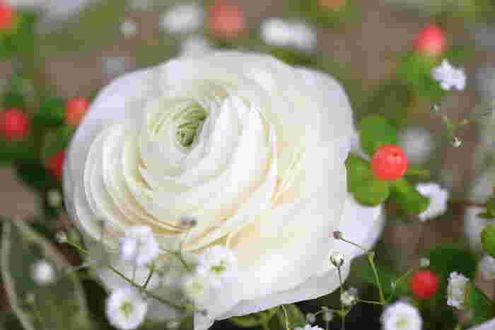 真っ白なラナンキュラスもブーケに選ばれることの多い人気の花です。花言葉は「純潔」。その佇まいにふさわしい真っ直ぐな意味があり、乙女のピュアな思いを代弁してくれます。