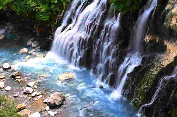 なぜ池がこんなに神秘的な青い輝きを見せているのか。それは白金温泉にある、地下水が湧き出て流れている潜流瀑である白ひげの滝などから流れているアルミニウムを含んだ水の影響によるもの。