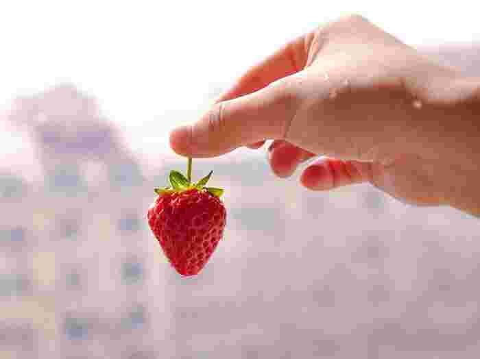 イチゴが色づいたら収穫を迎えます。真っ赤なイチゴ、美味しそうですね。