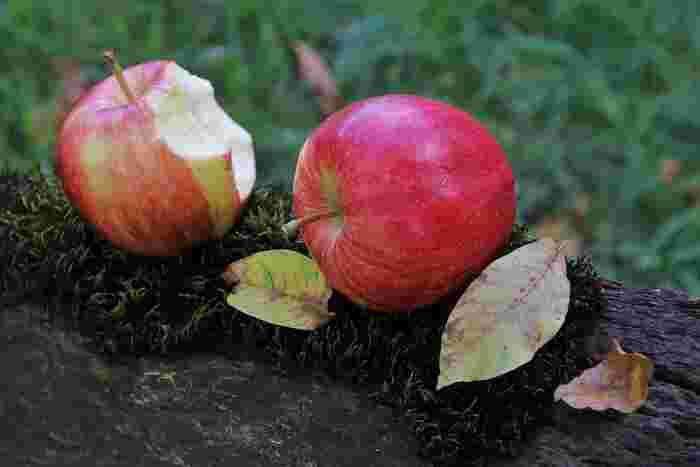 10月頃から今年収穫された「新りんご」がお店に並びます。よく見かけるりんごの名前にちょっとした意味がある事や、りんごを選ぶ時に知っておくと便利な事をご存知でしょうか。