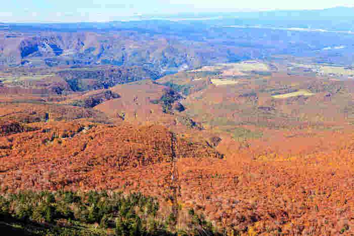まずは先ほどご紹介した、ロープウェーに乗って紅葉狩りを楽しめる八甲田山。八甲田山という名前の単独峰はなく、18もの火山などで構成される連峰で、周辺にはさまざまな紅葉の撮影スポットがあります。9月~10月の紅葉真っ盛りな時期に山頂から見下ろすと、燃えるような赤や鮮やかな黄色に色づいた木々が一面に広がるのですが、11月に入るとまた違った味わいを見せてくれることも。