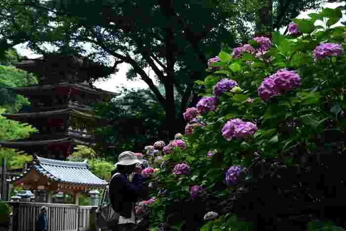 あじさいの季節が有名な長谷寺。豊かな自然に触れて、心がクリアになります。