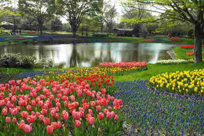 オランダのキューケンホフ公園をモデルにしたチューリップガーデンには、130品種22万球のチューリップが使用されています。 まるでおとぎの国に迷い込んだかと錯覚するような美しい景色が目の前に広がります。