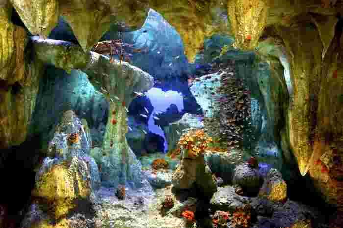 こちらは、海底の洞窟の様子を再現した水槽「洞窟に咲く花」。花のように鮮やかなサンゴたちが岩肌に生息している様子を眺められます。一枚の絵画のような、静かで美しい光景を楽しんで下さいね♪