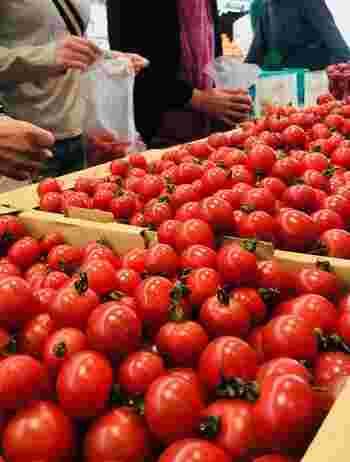 実は、トマトが赤くなる条件は「積算温度」と言って、開花からの連日の気温を合計して1100度に到達すると収穫を迎えます。夏は特にトマトが早く赤くなるため、出荷できる量が多くなるのです。