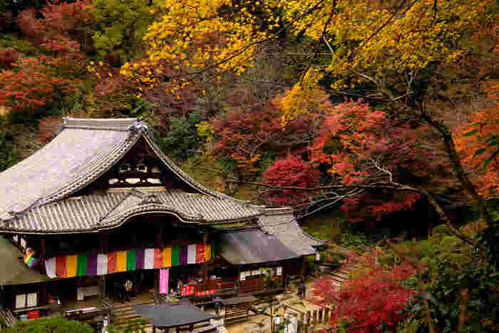 草創1300年の歴史を誇る日本で最初の厄払い・厄除け霊場として有名な岡寺は、秋には明日香を代表する紅葉スポットになります。三重宝塔周辺や本堂奥、奥の院から境内をぐるりと一周できるもみじのトンネルは必見。 ちなみに『近鉄岡寺駅』にはバスやタクシーがないので、訪れる際は『近鉄橿原神宮前駅』または『近鉄飛鳥駅』からバスを使うのが便利です。