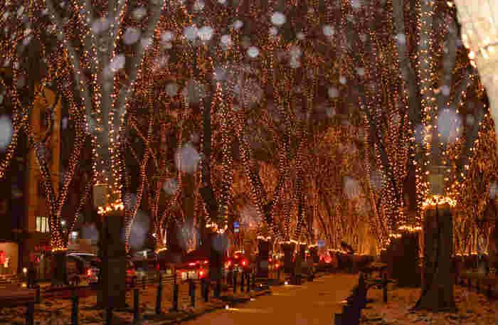 仙台の澄んだ冬の夜は、イルミネーションをより美しく見せてくれます。暖かみのあるLEDは寒さを忘れてしまいそうなほど。ぜひ大切な方とステキな時間を過ごしてみませんか?