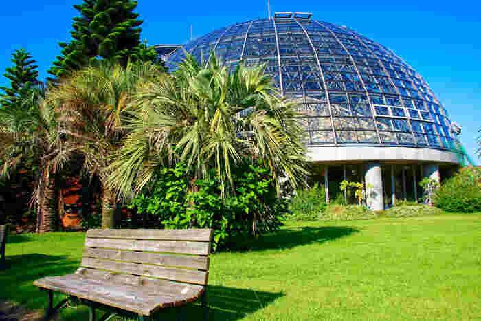 まずご紹介するのは、江東区にある都立夢の島公園内にある「夢の島熱帯植物館の大温室」。ドーム型の建物が特徴です。ゴミの焼却時に発生する熱を使って室温を管理している、エコな施設としても知られています。
