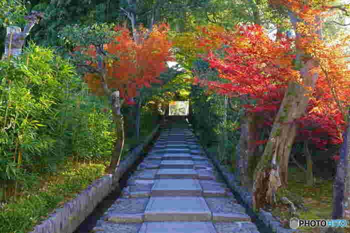 """高台寺へは、ねねの道から延びる石段の参道""""台所坂""""を上って。"""