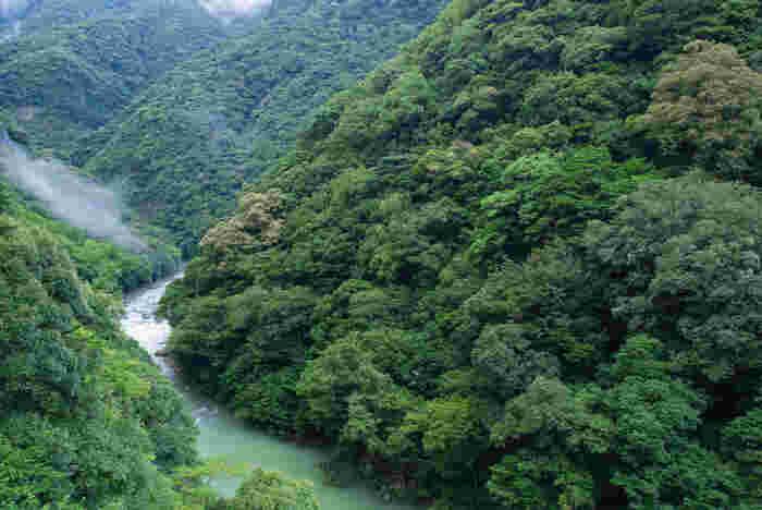 照葉樹林都市としても知られている綾町は、森林浴スポットとしても人気があり、森林セラピー基地に認定されています。
