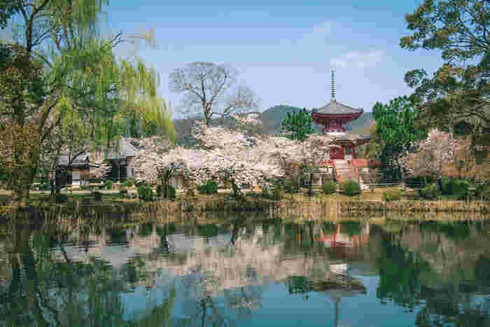 1200年の歴史を誇る「大覚寺」には日本最古と言われる人工庭池「大沢池」があります。大沢池は月見の名所として有名ですが、花見の名所としても人気のスポット。約1キロほどある周囲をソメイヨシノがぐるりと囲み、水面に映り込む桜や境内が何とも言えない風情を感じさせてくれます。