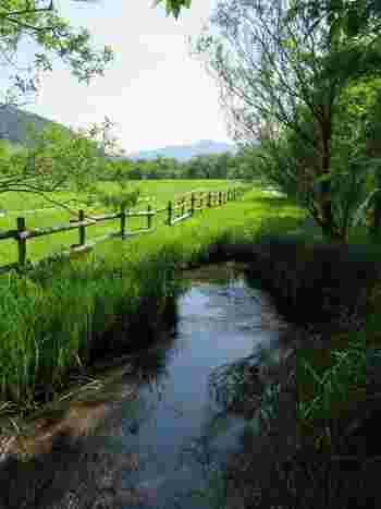 「仙石原高原」バス停で下車すれば、植物群落を眺められますが、仙石原で自然を満喫、湿原植物を観賞するのなら、以下で紹介する「箱根湿生花園」を訪れるのが断然おすすめです。  【「箱根湿生花園」に隣接する「仙石原湿原植生復元実験区」。5月末頃撮影】